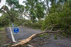 L'albero si è distrutto dall'intensità del ` s della tempesta immagine stock