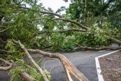L'albero si è distrutto dall'intensità del ` s della tempesta immagine stock libera da diritti