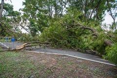 L'albero si è distrutto dall'intensità del ` s della tempesta immagini stock