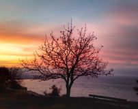 L'albero si appanna il sole del mare Fotografia Stock