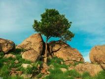 L'albero solo Fotografia Stock Libera da Diritti