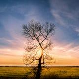 L'albero solo con il sole rays, erba verde Fotografia Stock Libera da Diritti