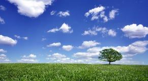L'albero solo su verde file fotografia stock