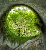 L'albero sopra il passaggio pedonale del tunnel al parco d'inscatolamento forte e Penang roa immagine stock
