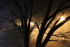 L'albero sotto la nebbia spessa ed il parco accende il Tennessee Immagini Stock