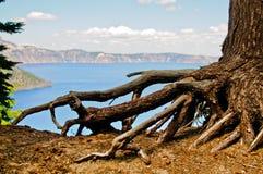L'albero sradica il lago crater Immagine Stock Libera da Diritti