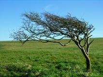 L'albero storto Fotografia Stock