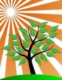 L'albero stylized con lo sprazzo di sole Immagini Stock Libere da Diritti