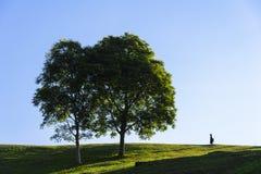 L'albero sulla collina Immagini Stock