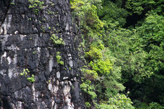 L'albero sulla collina Fotografie Stock Libere da Diritti