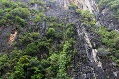 L'albero sulla collina Fotografia Stock Libera da Diritti