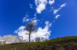 L'albero sulla collina con cielo blu e la nuvola nel giorno soleggiato immagine stock libera da diritti