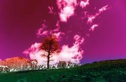 L'albero sulla collina con la nuvola nel tono rosa di colore immagini stock libere da diritti