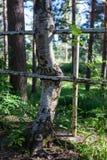 L'albero sviluppato ha attaccato in recinto del metallo fotografia stock