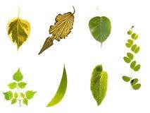 L'albero tropicale copre di foglie isolamento fotografia stock