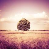 l'albero in un wheatfield della Toscana - Toscana - Italia ha tonificato Immagine Stock