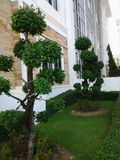 L'albero verde Fotografie Stock