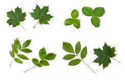 L'albero verde lascia l'accumulazione della natura di estate Fotografia Stock Libera da Diritti