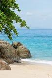 L'albero verde sano sporge le grandi rocce delle tonalità sul briciolo di paradiso Immagine Stock