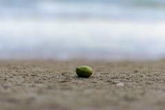 L'albero verde sta cadendo su una spiaggia, Fotografia Stock