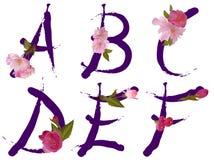 L'alfabeto della sorgente con i fiori segna A con lettere, la B, la C, la D, la E, F Immagini Stock