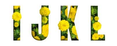 L'alfabeto I, J, K, L ha fatto dalla fonte del fiore del tagete isolata su fondo bianco Bello concetto del carattere fotografia stock libera da diritti