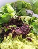L'alga di Dulse si sfalda su un'insalata Fotografie Stock Libere da Diritti