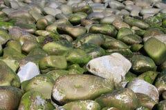 L'alga ha coperto i ciottoli della spiaggia fotografia stock