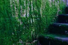 L'alga ha coperto le scale Fotografia Stock Libera da Diritti