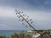 L'Algarve un beau voyage par la route au Portugal - belles falaises - vue de côté Photographie stock