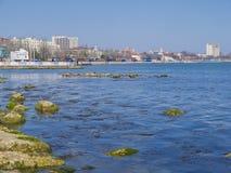 L'algue dans la mer et la ville derrière Image stock