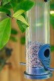 L'alimentatore dell'uccello Immagini Stock