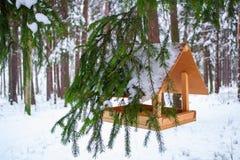 L'alimentatore dell'uccello sul ramo ha mangiato sotto neve sul fondo della foresta dell'inverno fotografia stock libera da diritti