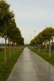 L'allée avec des lignes des arbres Image stock