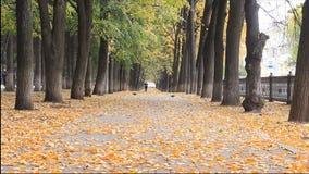 L'allée d'or colorée en parc d'automne, feuilles sont fallng Homme méconnaissable dans le costume marchant sur une allée et parle banque de vidéos