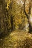 L'allée de chêne avec des feuilles d'automne, le soleil rayonne Photos libres de droits