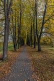 L'allée de tilleul avec le jaune part dans le parc d'automne photographie stock