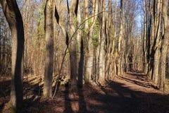 L'allée en parc Image stock