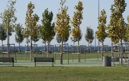 L'allée en parc vide près de mer avec des arbres Photos libres de droits