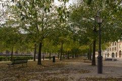 L'allée entre les arbres en parc Image libre de droits