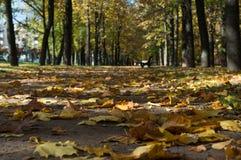 L'allée entre les arbres en parc Photo stock