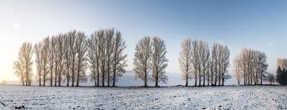 L'allée scénique d'arbre en hiver avec la neige a couvert des champs Photographie stock libre de droits