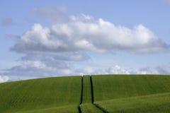 L'Allemagne, Bavière, Irschenhausen, pistes pour véhicules par le seigle mettent en place (le cereale de sécale) photo libre de droits