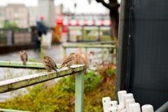 L'Allemagne Berlin, île de musée, oiseau sauvage d'automne, Image libre de droits