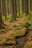 L'Allemagne, forêt bavaroise Photos libres de droits