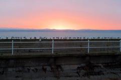 L'Allemagne, Friedrichschafen - 6 janvier 2019 : Un beau coucher du soleil dans Friedrichschafen Beaucoup de mouettes se reposant photographie stock