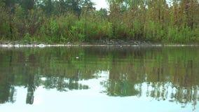 l'allemagne Réserve naturelle Biotope Durée sur l'eau clips vidéos