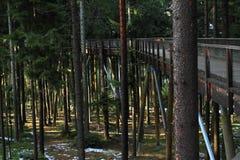 L'allerta di Lipno degli alberi della traccia Fotografia Stock