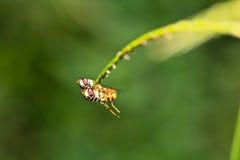 L'allevamento degli insetti Immagine Stock Libera da Diritti