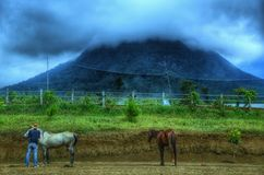 L'allevatore di cavalli fotografia stock libera da diritti